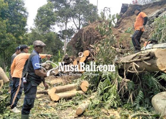 Nusabali.com - tergerus-longsor-pohon-beringin-tumbang