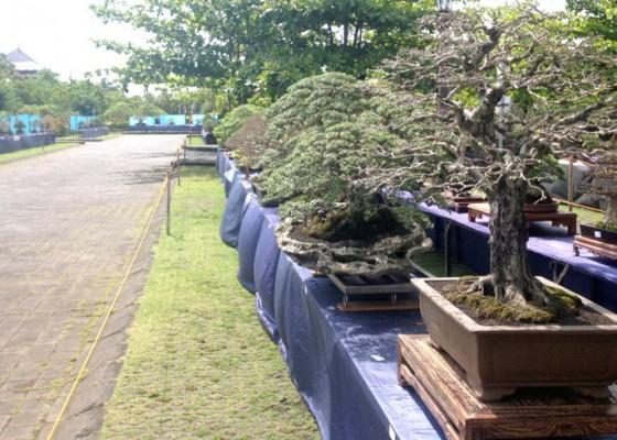 Nusabali.com - bonsai-langka-hiasi-areal-puspem-badung