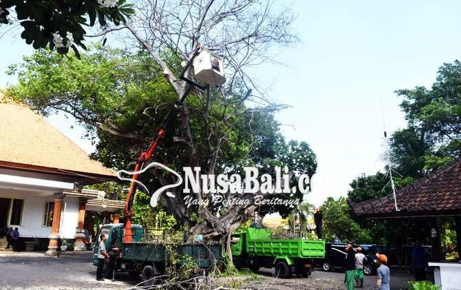 www.nusabali.com-pangkas-pohon-di-kantor-bupati-buleleng