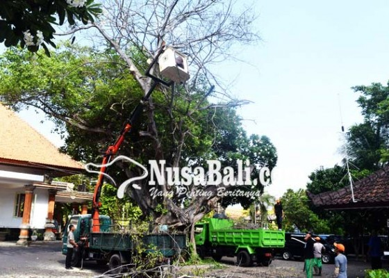 Nusabali.com - pangkas-pohon-di-kantor-bupati-buleleng