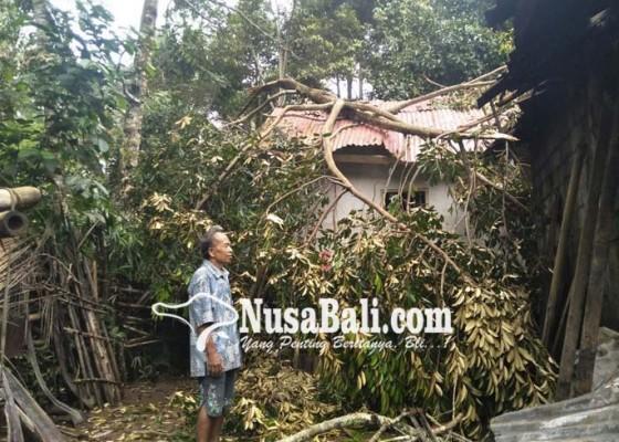 Nusabali.com - rumah-dan-dapur-tertimpa-pohon-durian