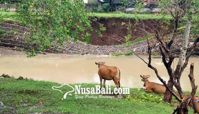 www.nusabali.com-baru-empat-bulan-rampung-senderan-sungai-samblong-ambrol