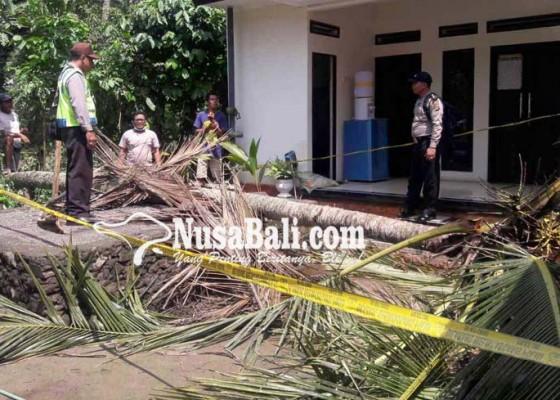 Nusabali.com - pemanjat-kelapa-terjatuh-dari-ketinggian-17-meter