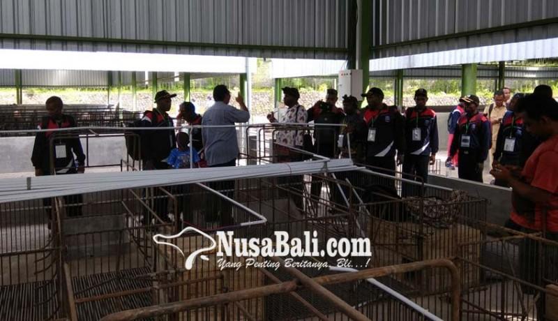 www.nusabali.com-limbah-sapi-numpuk-di-lokasi-penampungan