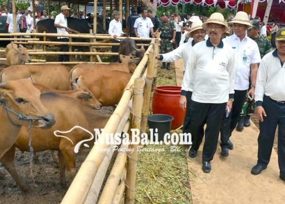 Nusabali.com - badung-siapkan-rp-31-miliar-untuk-pakan-ternak