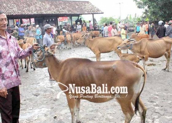 Nusabali.com - harga-sapi-masih-anjlok