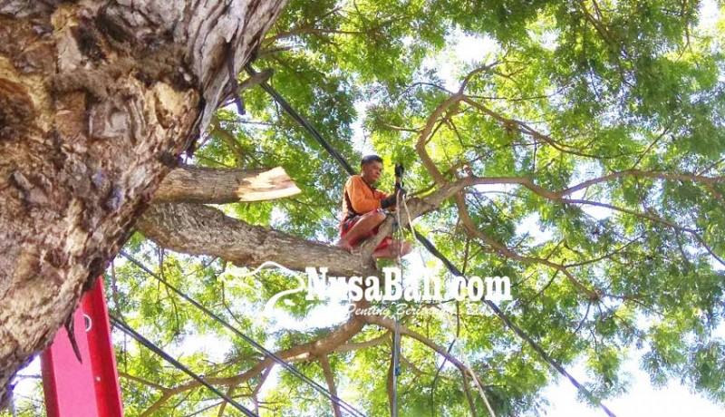 www.nusabali.com-pohon-perindang-berisiko-dirapikan