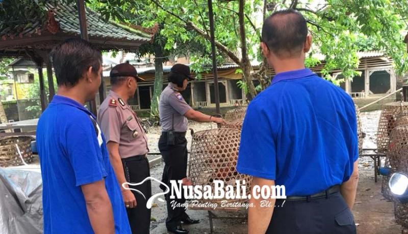 www.nusabali.com-maling-ayam-aduan-satu-tertangkap-satu-lolos