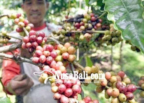 Nusabali.com - jeruk-dan-kopi-dijajakan-ke-investor
