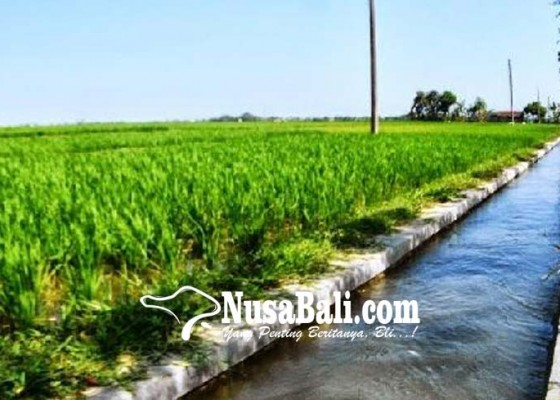 Nusabali.com - dana-perbaikan-irigasi-capai-rp-72-miliar