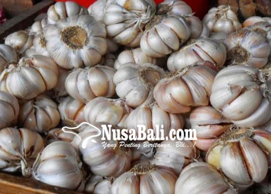 Nusabali.com - dinas-pertanian-bangli-kembangkan-kesuna