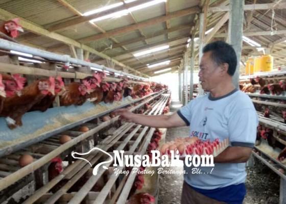 Nusabali.com - harga-telur-ayam-turun-di-peternak