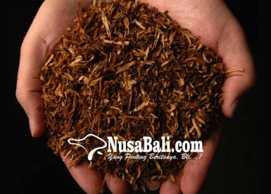 Nusabali.com - pembatasan-impor-tembakau-dikaji