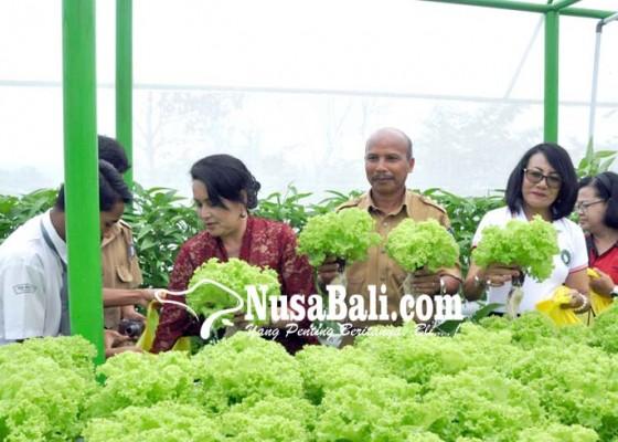 Nusabali.com - badung-kampanyekan-budidaya-tanaman-hidroponik