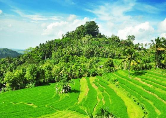 Nusabali.com - kawasan-wisata-bukit-jambul-perlu-ditata-ulang