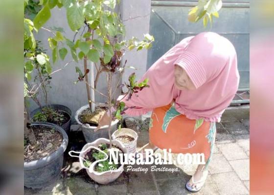 Nusabali.com - irt-temukan-ganja-saat-nyapu-di-halaman-rumah
