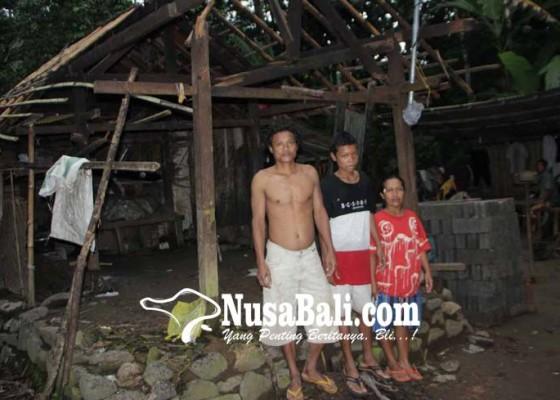 Nusabali.com - rumah-tertimpa-pohon-satu-keluarga-mengungsi