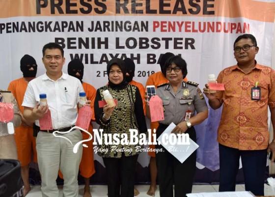Nusabali.com - jaringan-penyelundup-benih-lobster-dibekuk