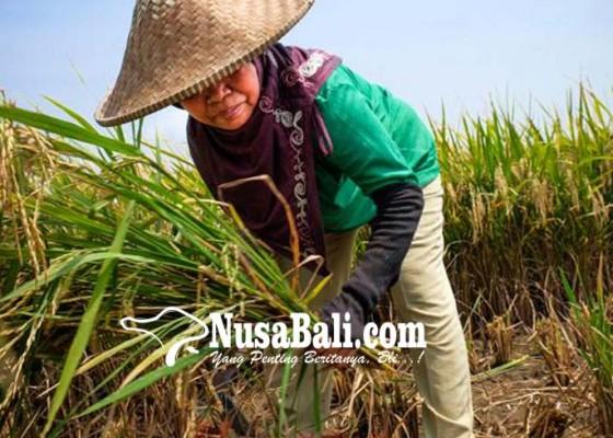 Nusabali.com - nilai-tukar-petani-bali-menurun