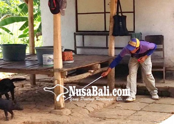 Nusabali.com - perbekel-akan-diminta-susun-draf-pararem-ketentuan-memelihara-anjing