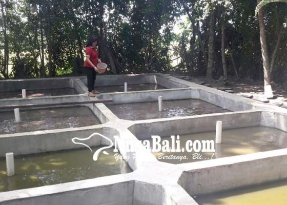 Nusabali.com - 40-penyandang-disabilitas-dapat-fasilitas-usaha-ternak-lele-dan-pembuatan-paving