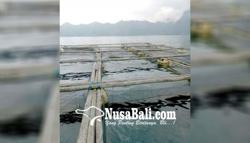 www.nusabali.com-tikus-serang-keramba-di-danau-batur