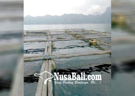 Nusabali.com - tikus-serang-keramba-di-danau-batur
