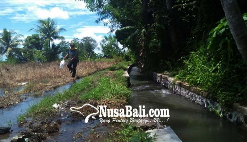 www.nusabali.com-saluran-irigasi-subak-pau-rusak