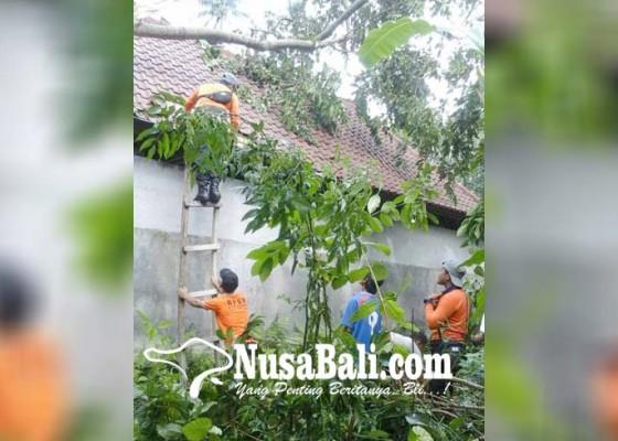 Nusabali.com - bale-gong-pura-paibon-pasek-tertimpa-pohon-tumbang