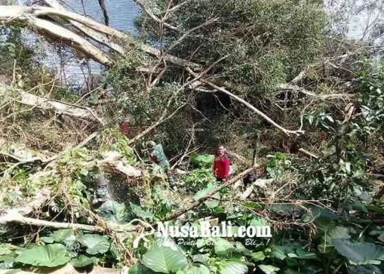 Nusabali.com - pohon-beringin-tumbang-timpa-boat