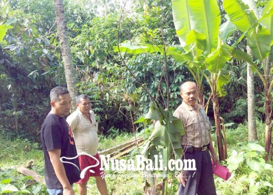 Nusabali.com - potong-rumput-gajah-dilaporkan-ke-polisi