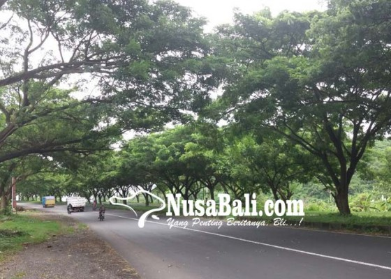 Nusabali.com - pohon-rawan-tumbang-pengendara-was-was