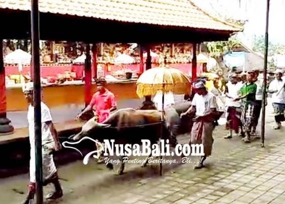 Nusabali.com - krama-desa-selat-gelar-mapepada-wewalungan