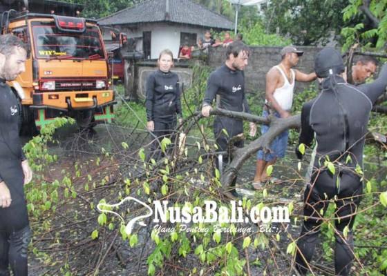 Nusabali.com - 4-wisatawan-prancis-gotong-royong-singkirkan-pohon-tumbang