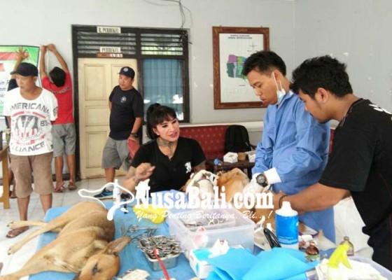Nusabali.com - puluhan-anjing-bondalem-disterilisasi