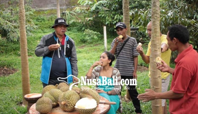www.nusabali.com-festival-makan-durian-digelar-di-desa-tajun