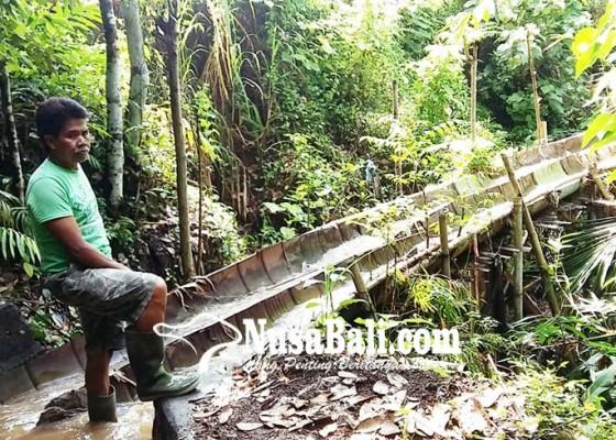 Nusabali.com - irigasi-subak-tegal-panji-sudah-tiga-tahun-rusak