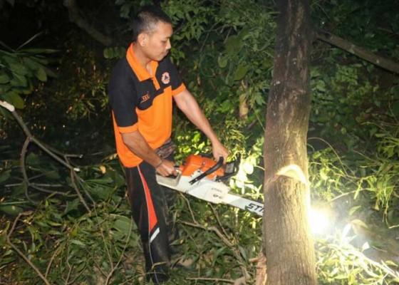 Nusabali.com - pohon-bunut-tua-tumbang-tengah-malam