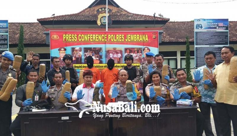 www.nusabali.com-penyelundupan-12-kg-ganja-kering-berhasil-digagalkan-di-gilimanuk