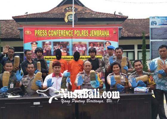 Nusabali.com - penyelundupan-12-kg-ganja-kering-berhasil-digagalkan-di-gilimanuk