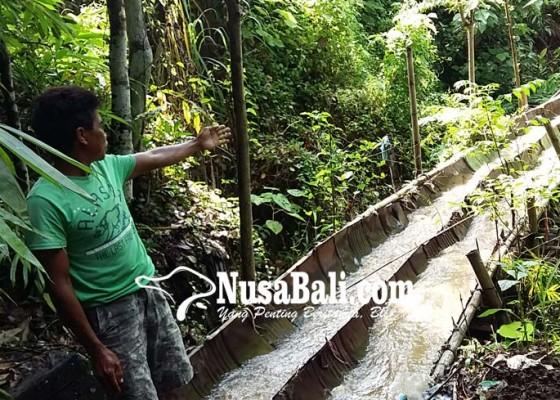 Nusabali.com - irigasi-subak-rusak-sejak-3-tahun