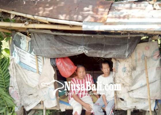 Nusabali.com - lansia-miskin-desa-panji-tak-dapat-jatah-rastra