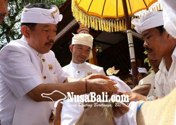 Nusabali.com - usai-palebon-puri-ubud-gelar-maligia