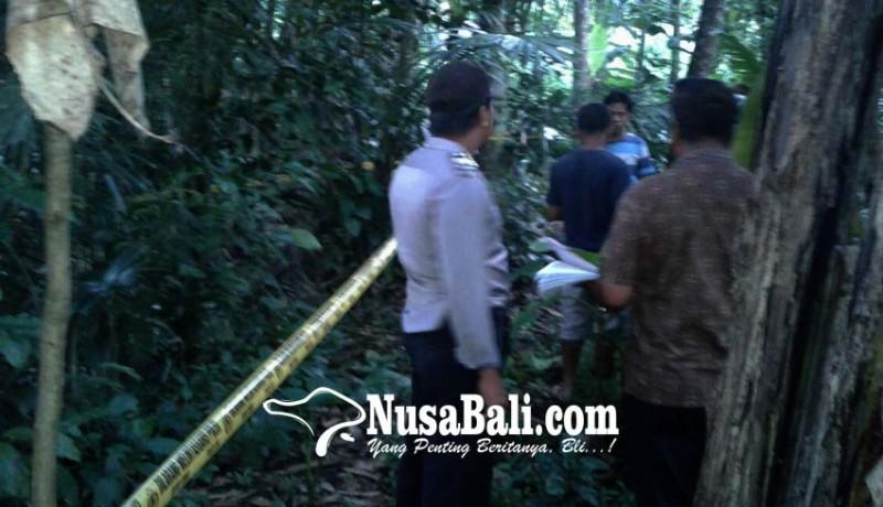 www.nusabali.com-pekak-teken-gantung-diri-di-pohon-kopi