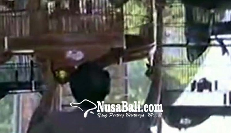 www.nusabali.com-burung-gerakkan-ekonomi-hingga-rp-17-triliun