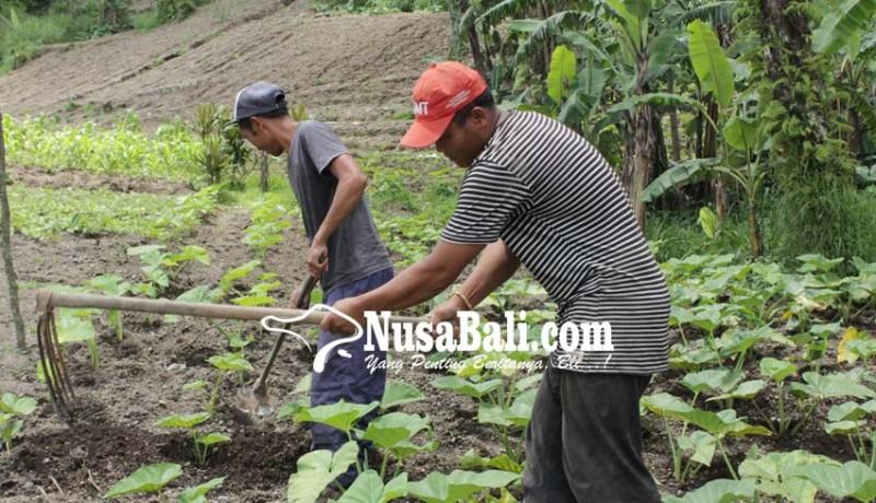www.nusabali.com-warga-temukus-bingung-rayakan-nyepi