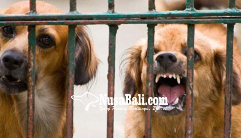 www.nusabali.com-setahun-1790-kasus-gigitan-anjing