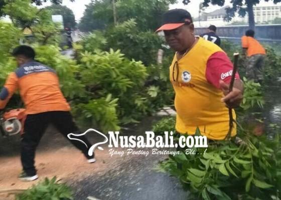 Nusabali.com - pohon-tumbang-timpa-pengendara
