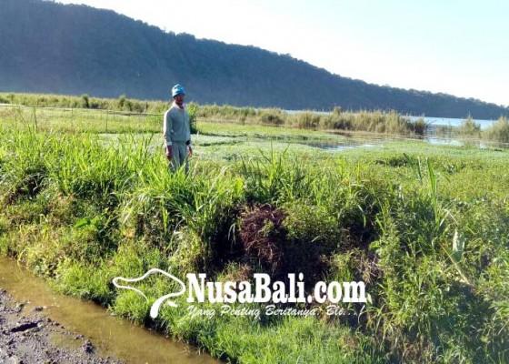 Nusabali.com - air-danau-meluap-sejumlah-petani-tidak-bisa-tanam-sayur