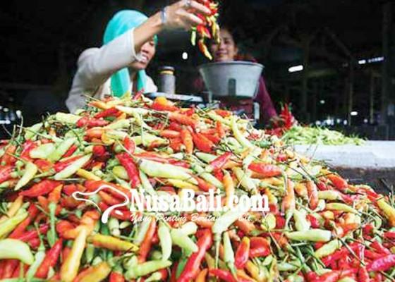 Nusabali.com - pemprov-bentuk-rumah-pangan-cabai